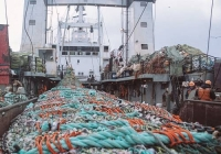 Russia increases the supply of processed fish to Japan and China